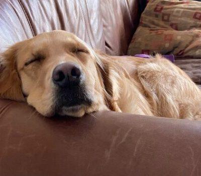 Training partner Pixel gets some sleep